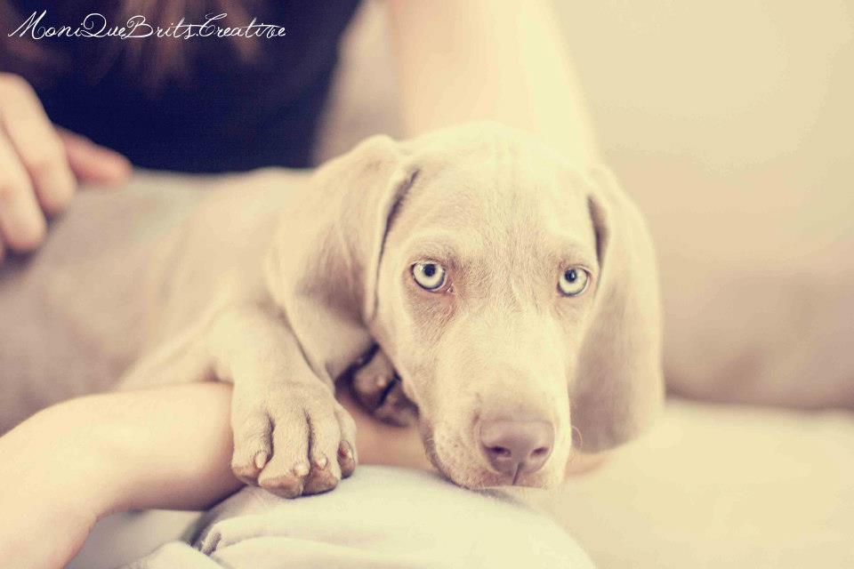 dog photography tips pretoria